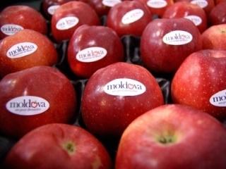 Всего 20% молдавских фруктов могут экспортироваться в ЕС
