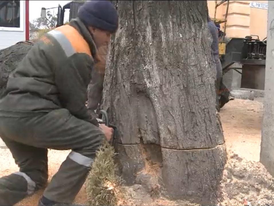 La Chișinău continuă tăierea copacilor (VIDEO)